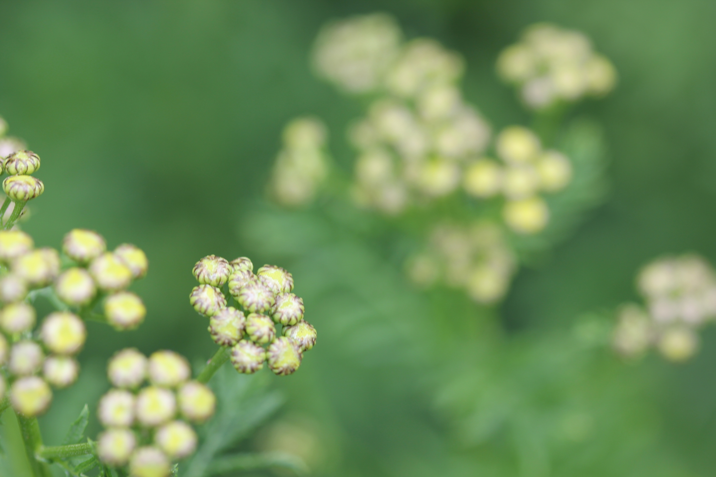 dye garden photos 021.JPG