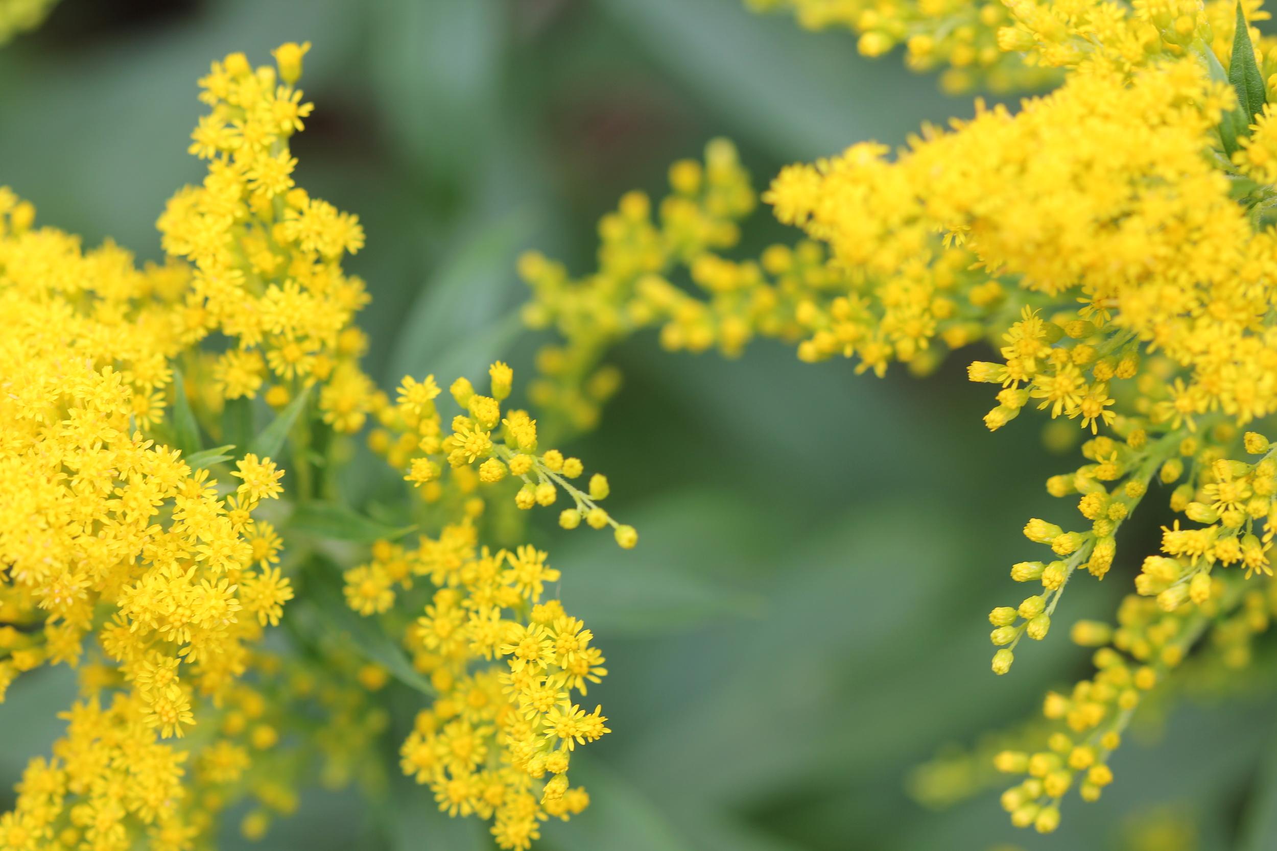 dye garden photos 030.JPG