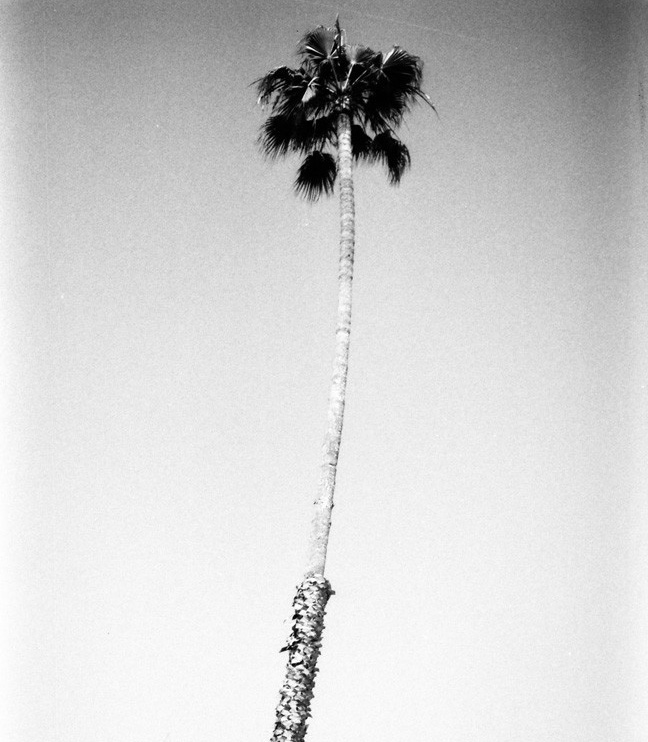 Tappan | Los Angeles
