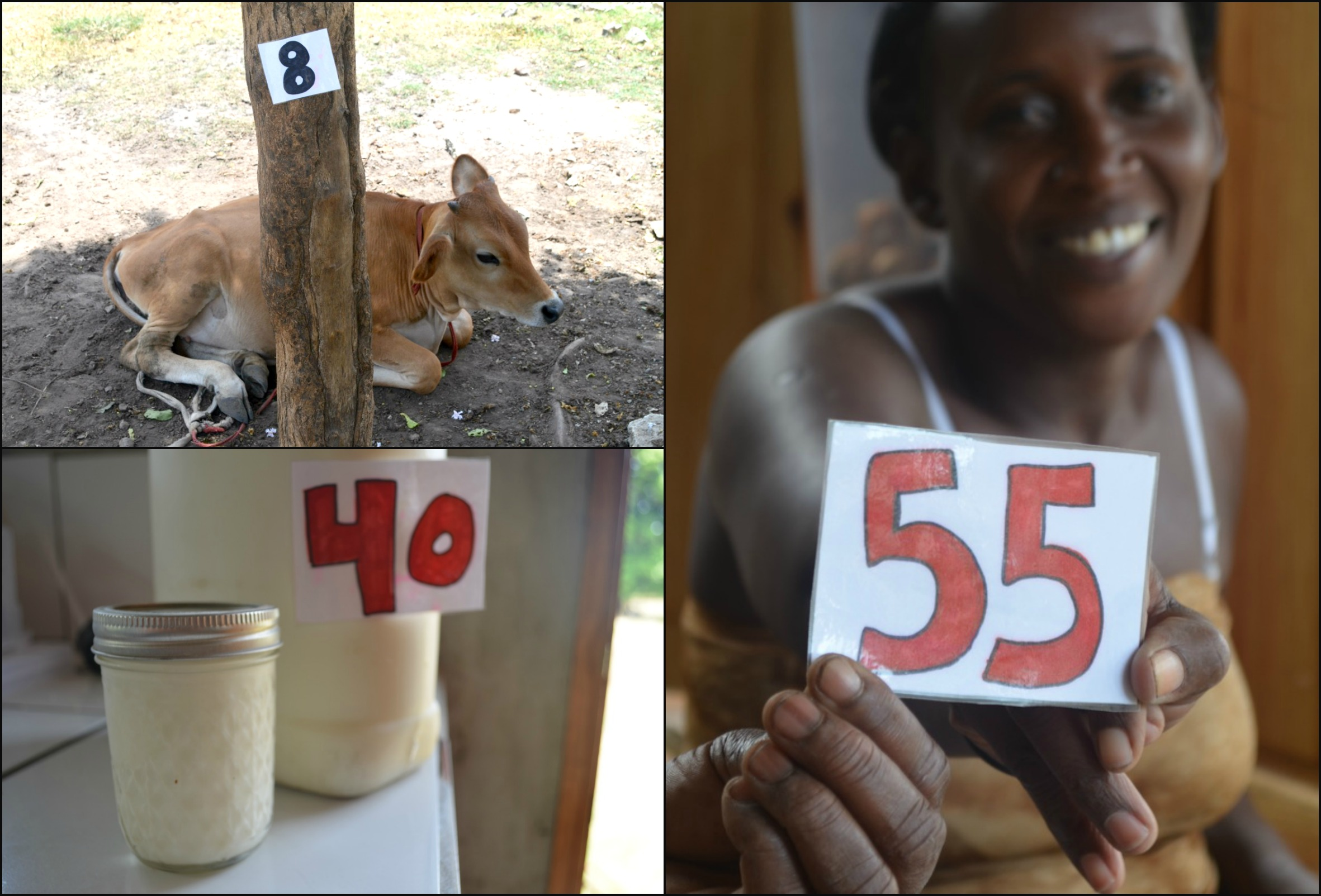 8 cows, 40 yogurts sold this week, 55 meals served per day.