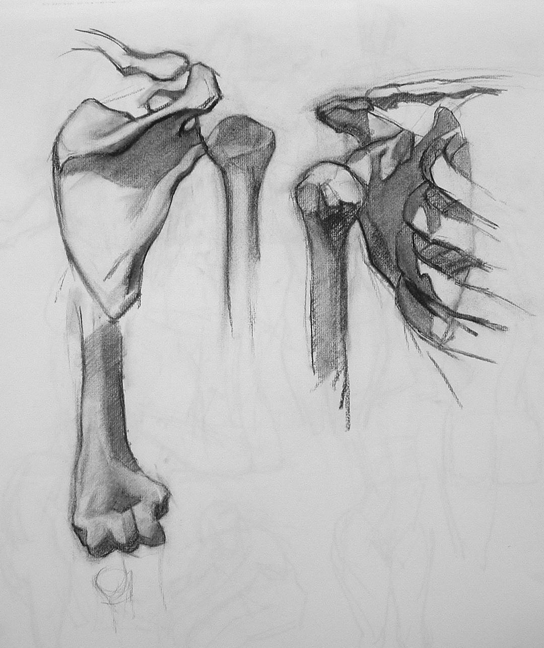 anatomy study.JPG