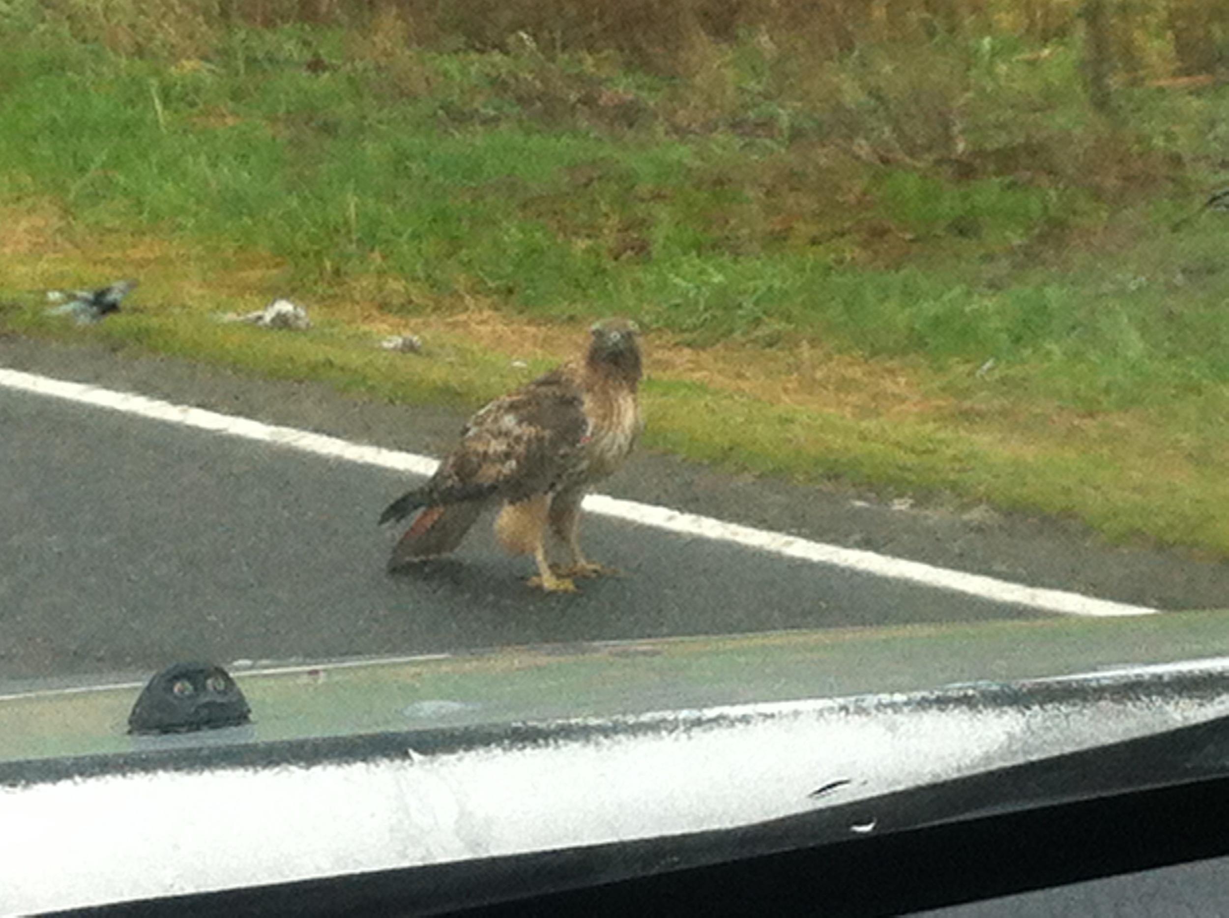 Good morning, Mr. Hawk.