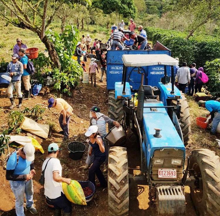 hacienda-miramonte-coffee-farmers.jpg