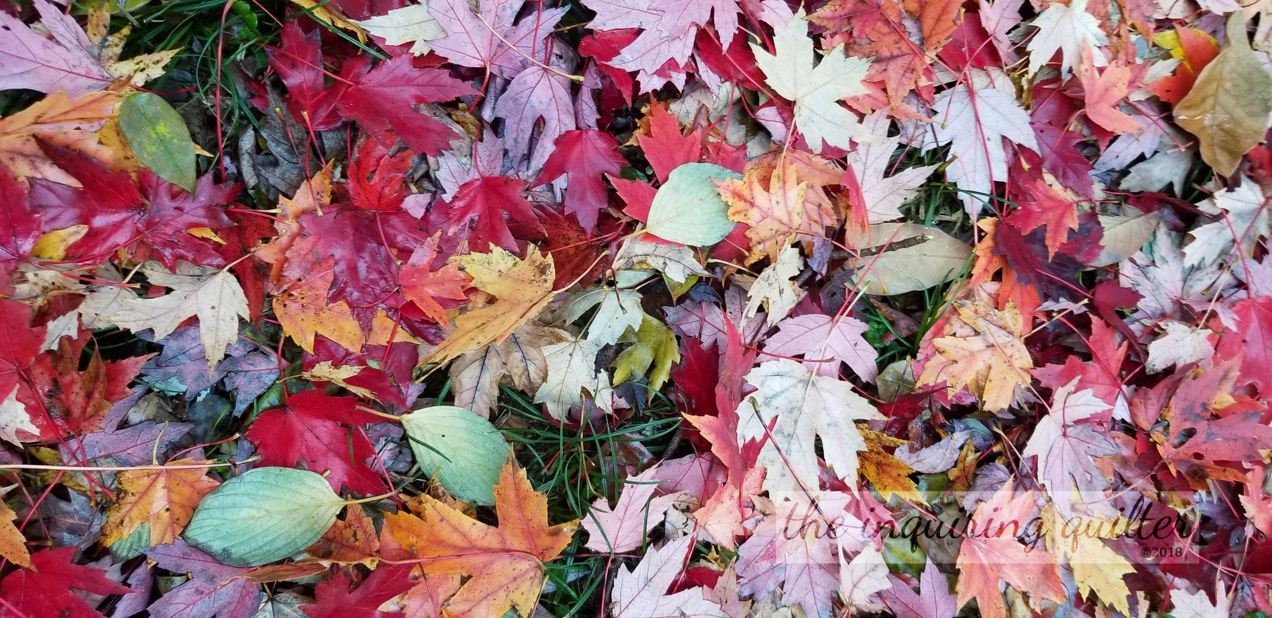 Fall leaves 4.jpg