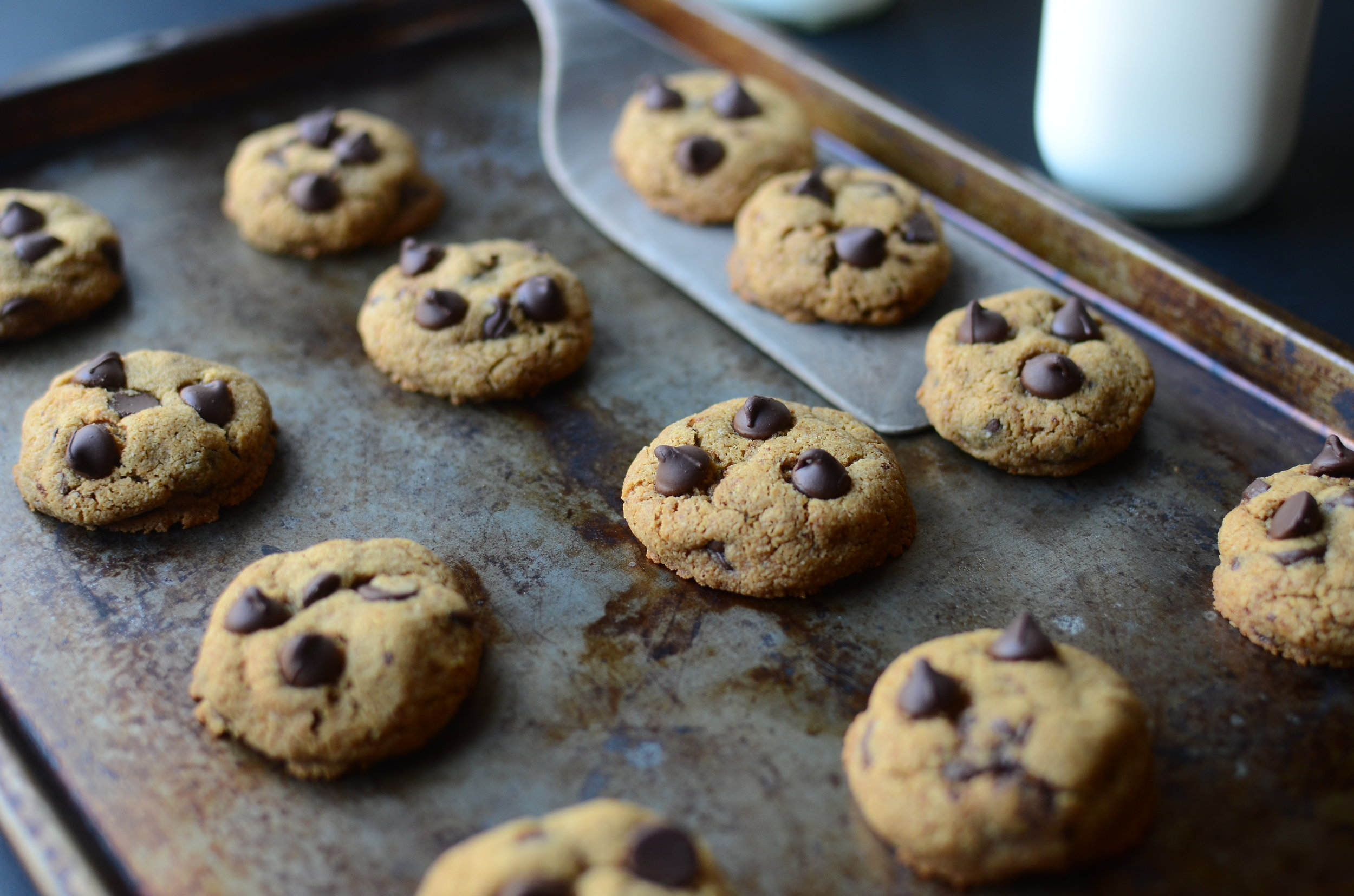 Gluten free chocolate chip cookies. almond meal chocolate chip cookies. almond flour chocolate chip cookies. gluten-free almond meal and coconut oil cookies.