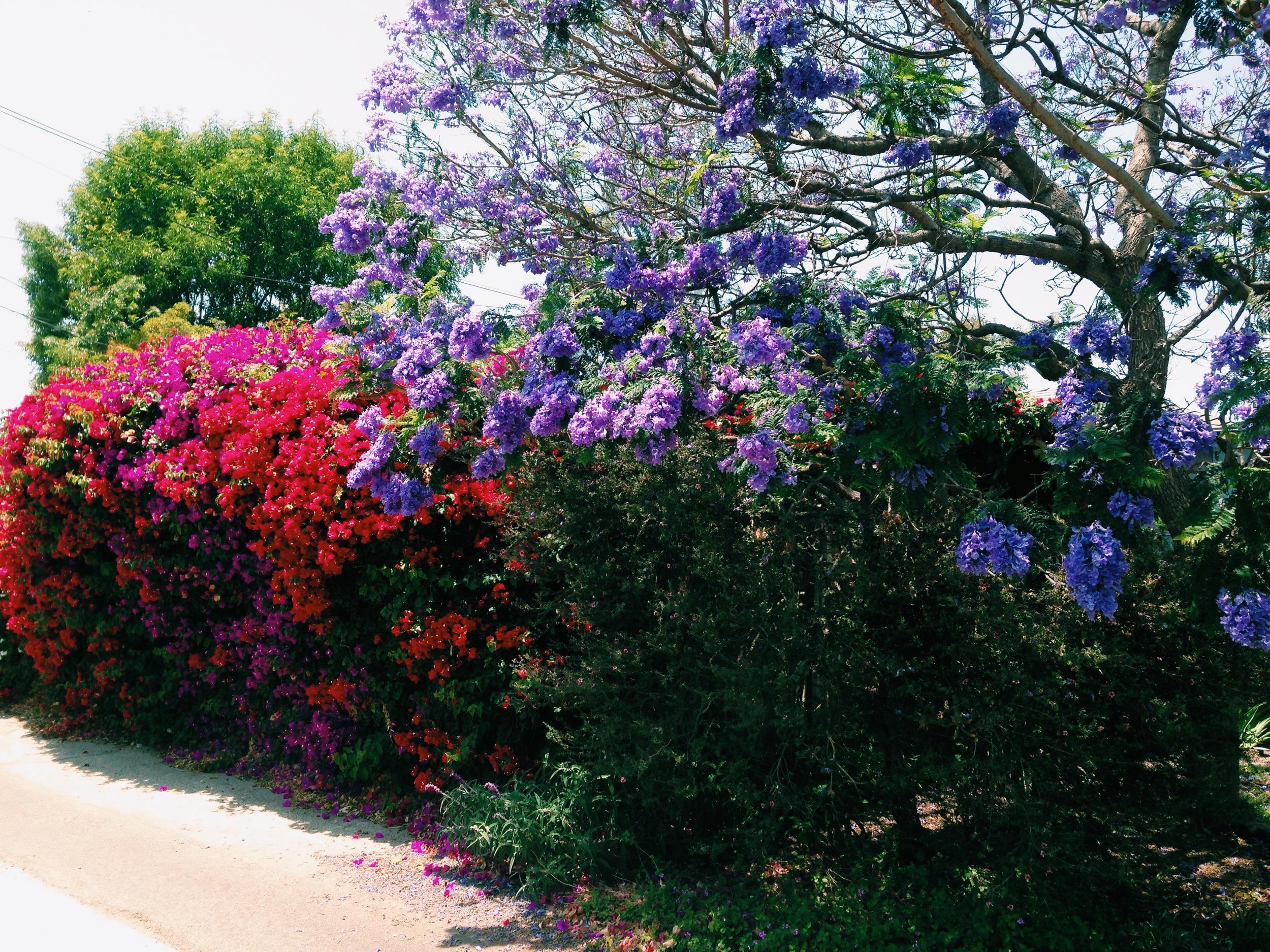 // blooms