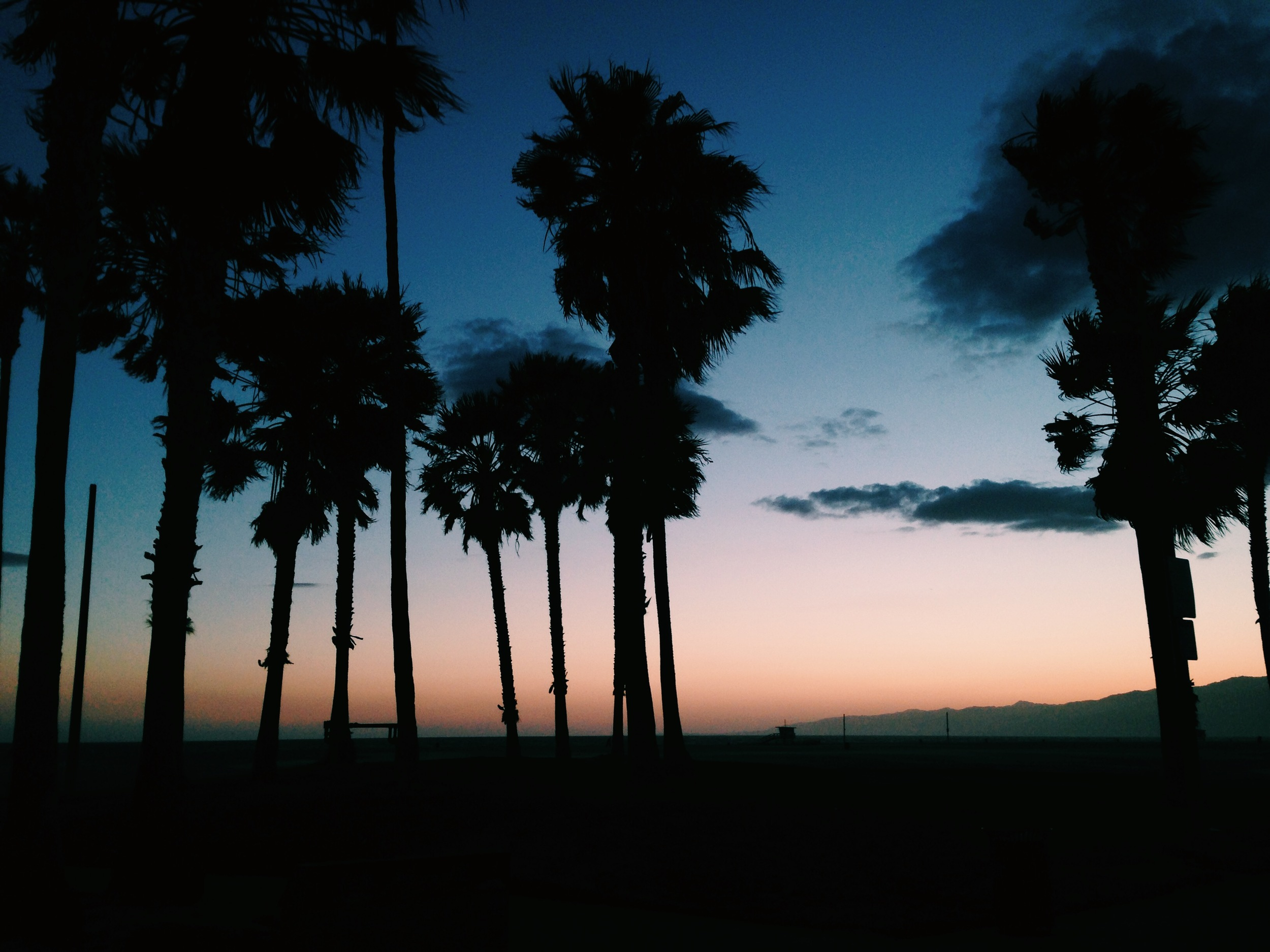 // in the eve @venicebeach
