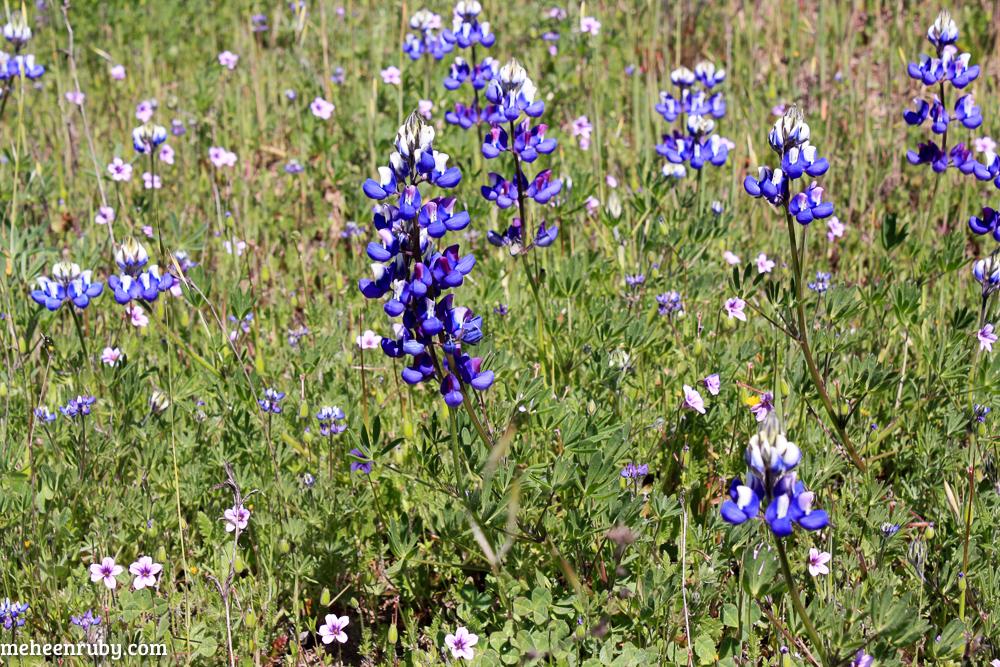 fort ord wildflowers web-25.jpg