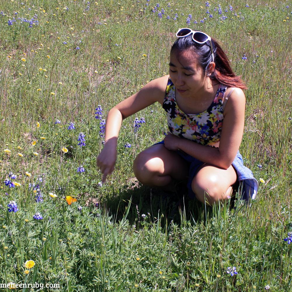 fort ord wildflowers web-22.jpg