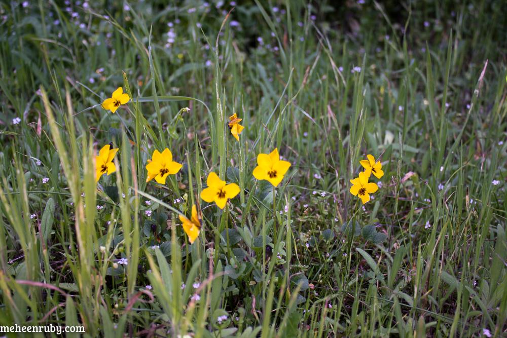 fort ord wildflowers web-16.jpg