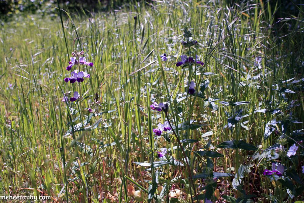 fort ord wildflowers web-17.jpg