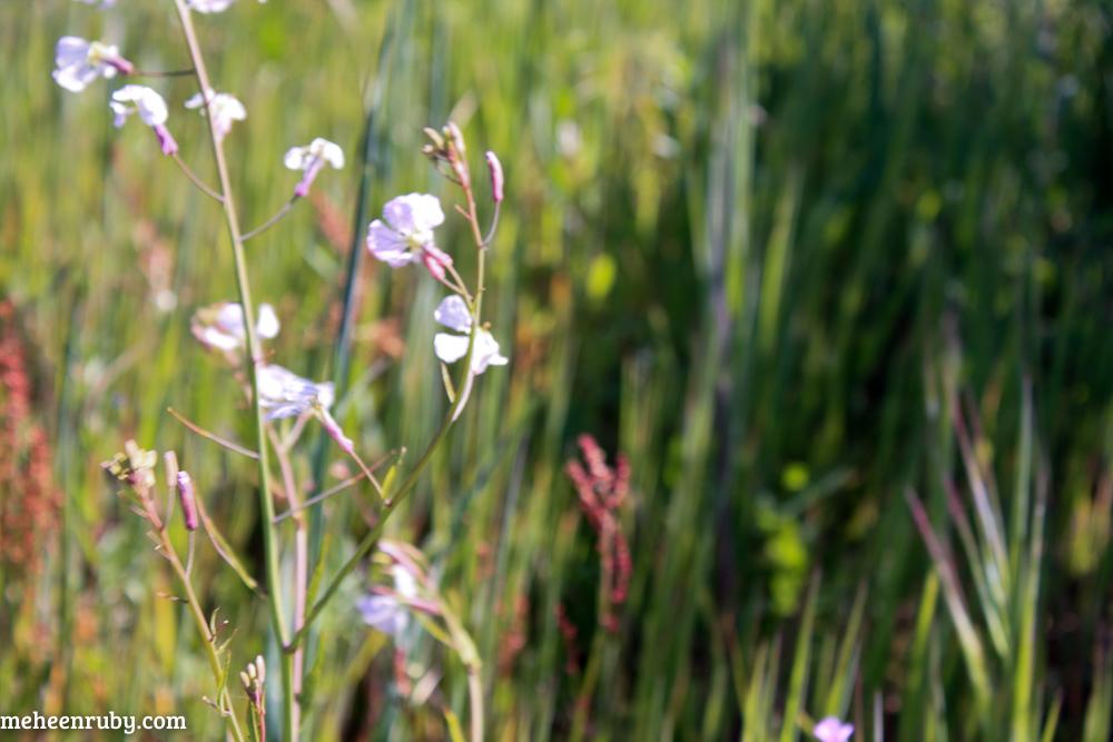 fort ord wildflowers web-13.jpg