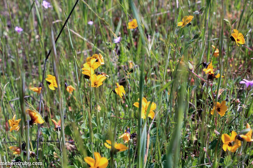 fort ord wildflowers web-14.jpg
