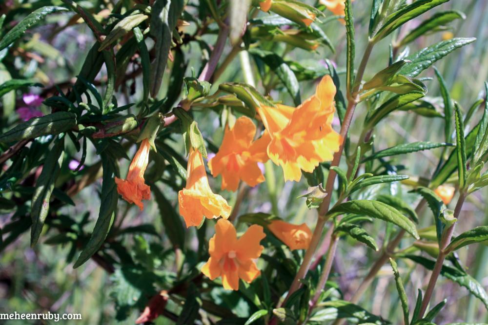 fort ord wildflowers web-8.jpg