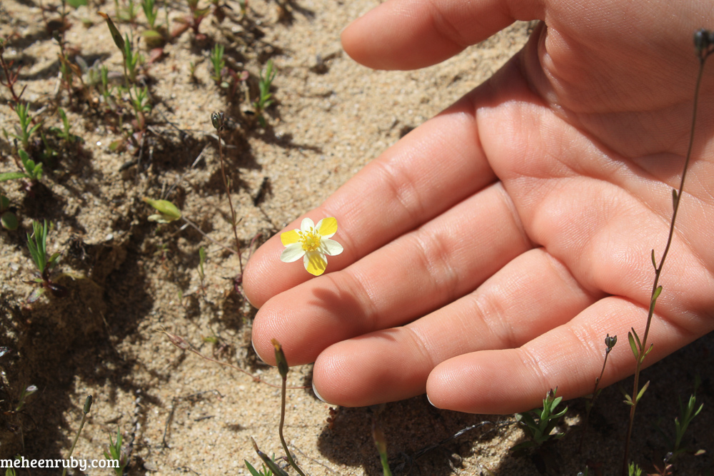 fort ord wildflowers web-9.jpg
