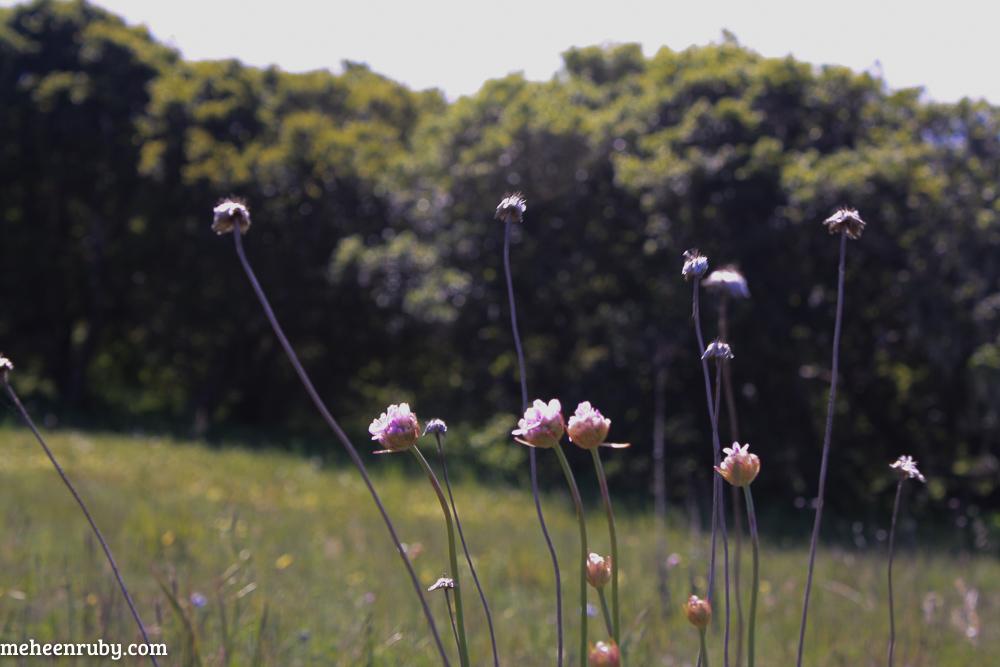 fort ord wildflowers web-5.jpg