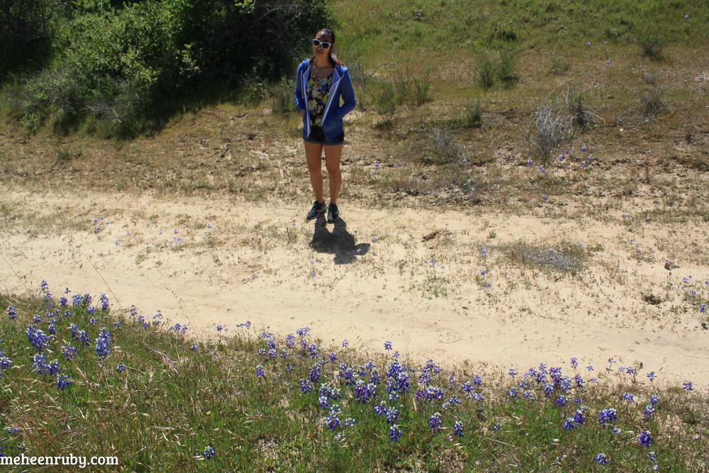 fort ord wildflowers web-1.jpg
