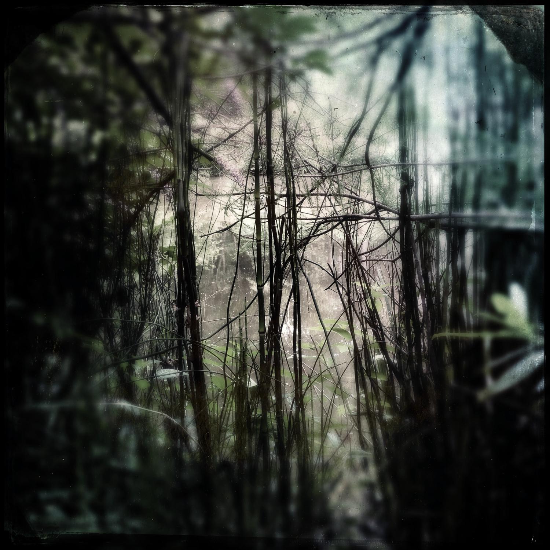 Clemson Botanical Garden 2013
