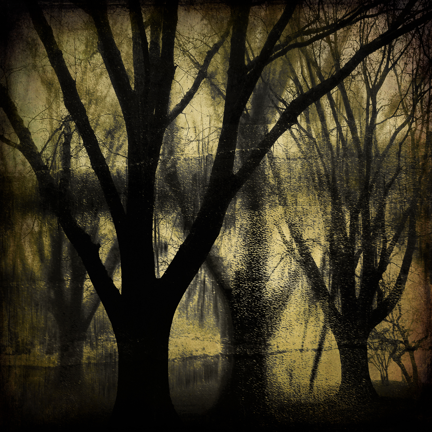 Darkness in the Woods