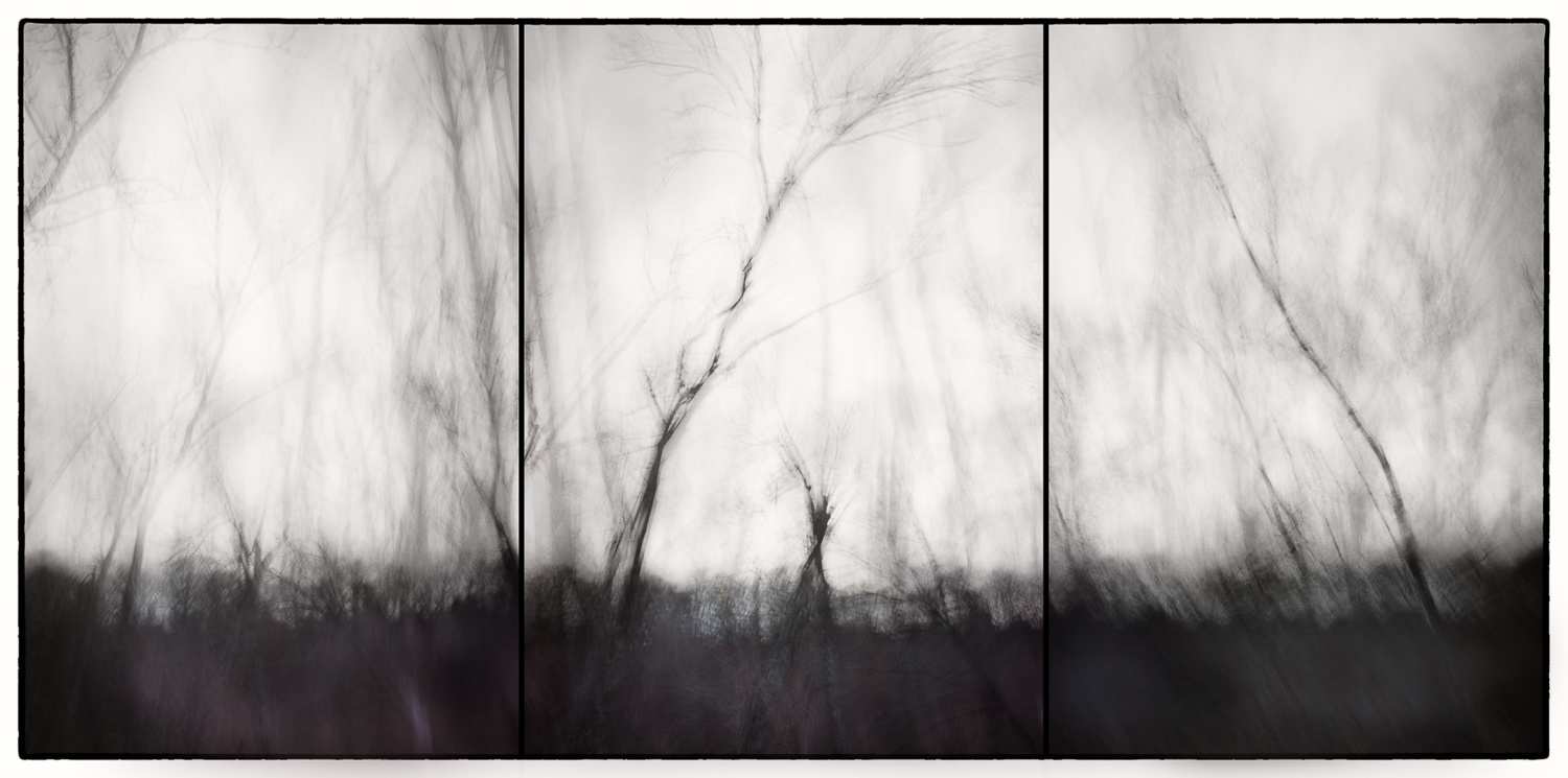 trees in motion triptych B&W.jpg