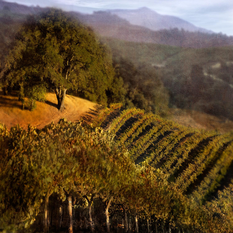 Landscape2_finalflat.jpg
