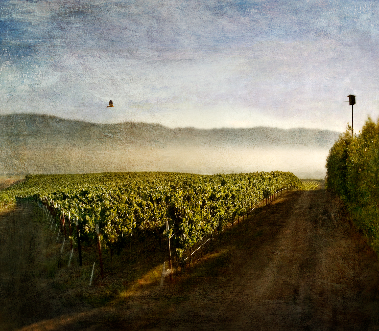 mountain_vineyard11v2F.jpg