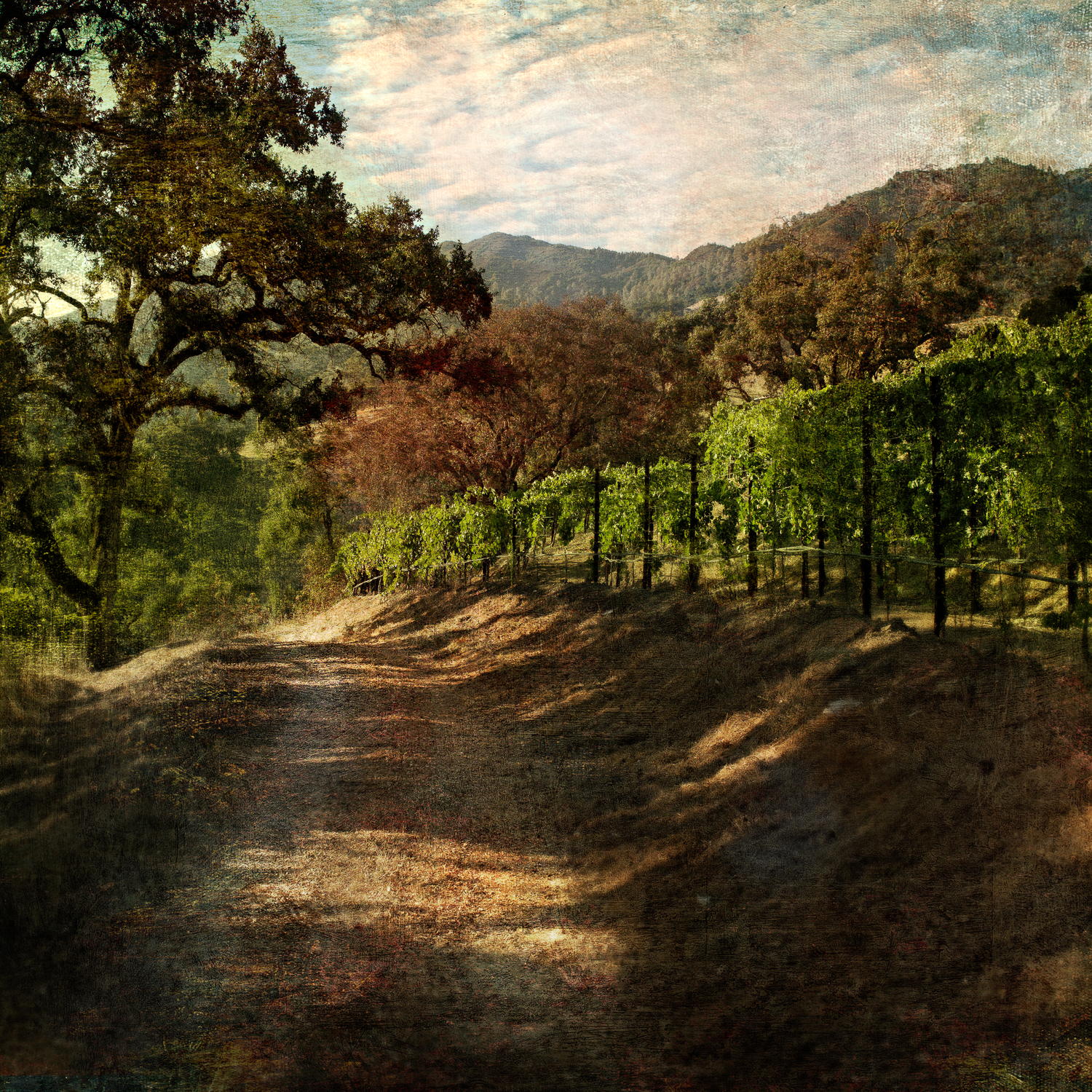 mountain_vineyardv6v2F.jpg