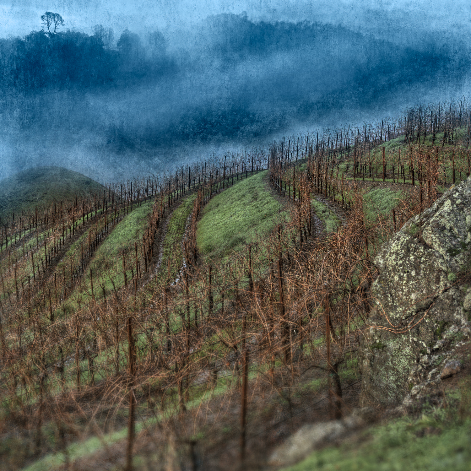 Hill_vineyard_blue_fog.jpg