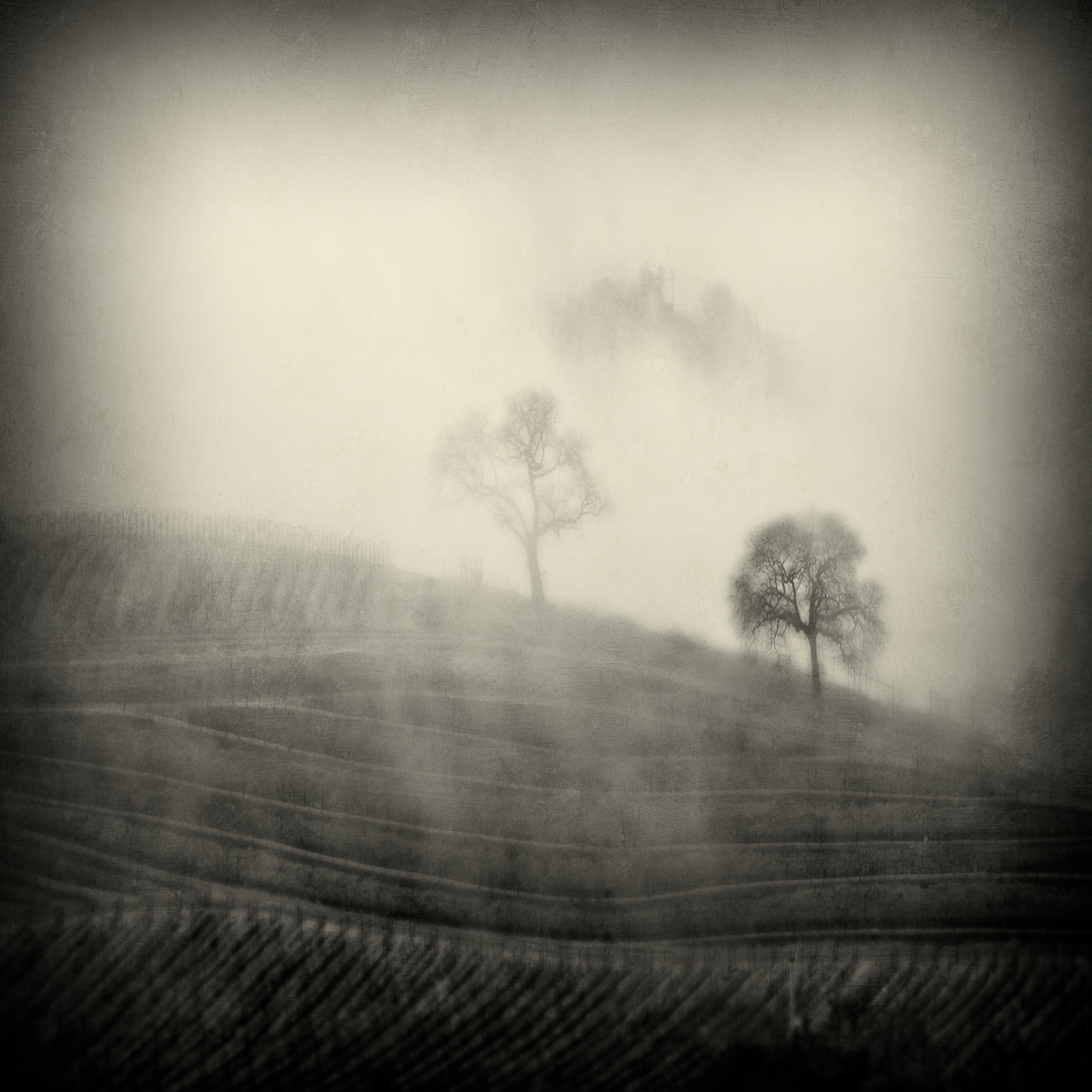 2_trees_in_the_fog36x36flatprint.jpg