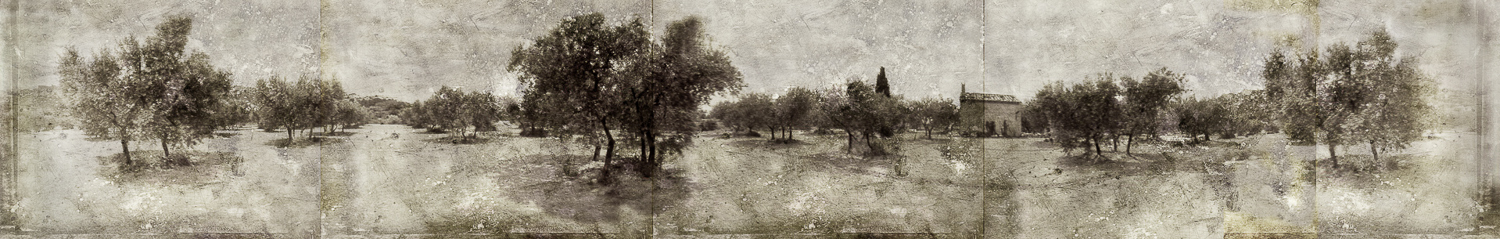 olive grove no border UFA.jpg