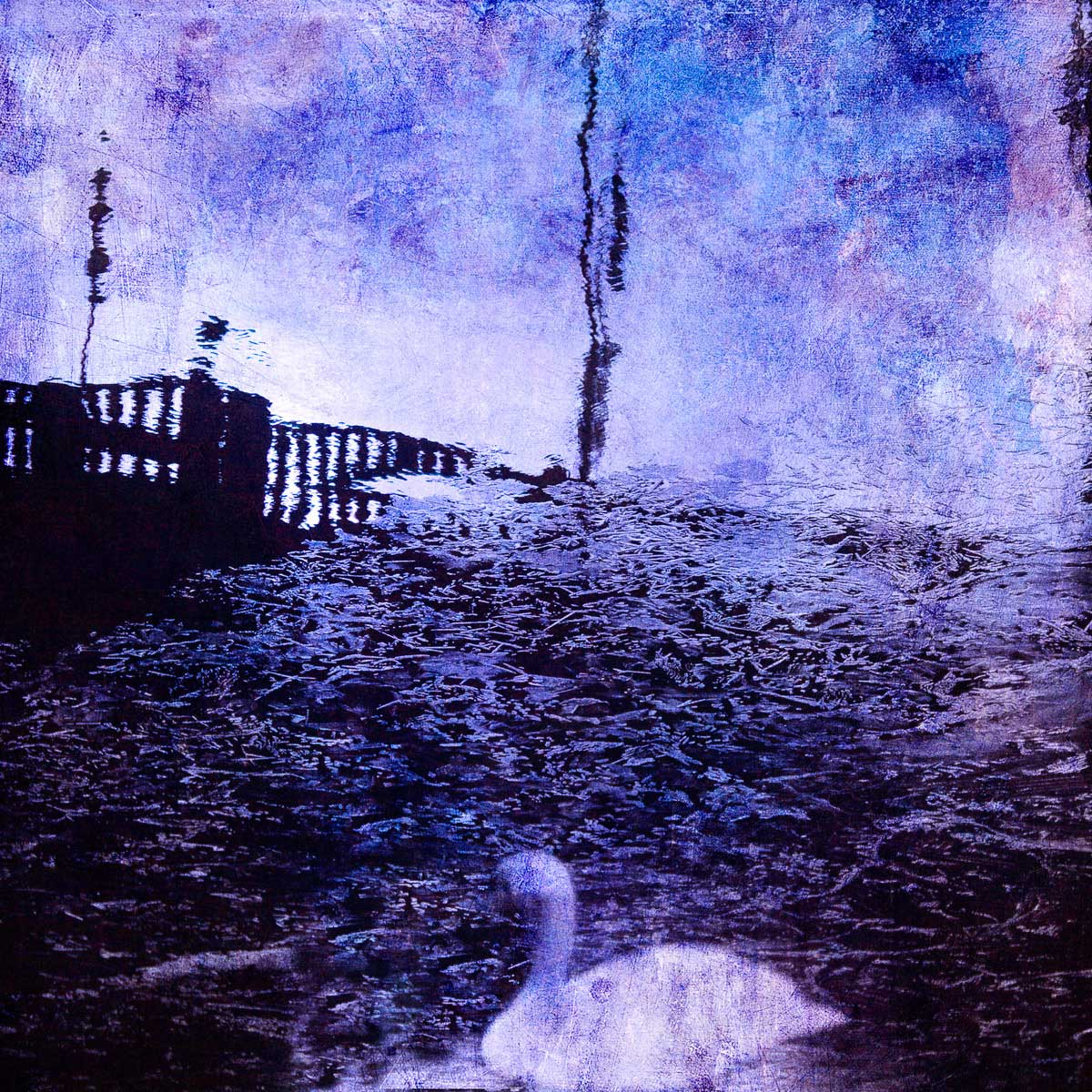 blue_swansfa.jpg
