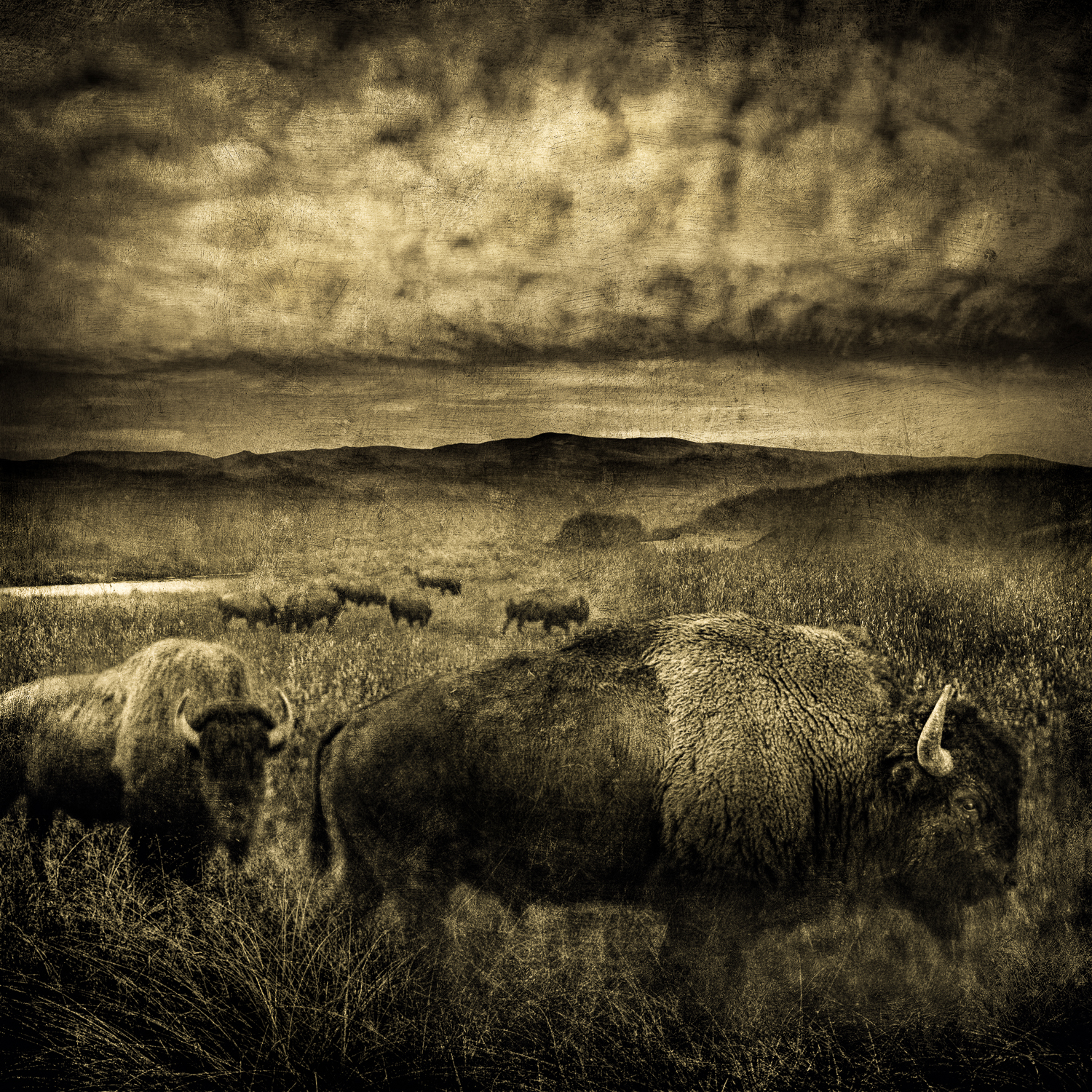 buffalo storm cloudsV4Flat_40x40split_tone3_8bit copy-Edit.jpg
