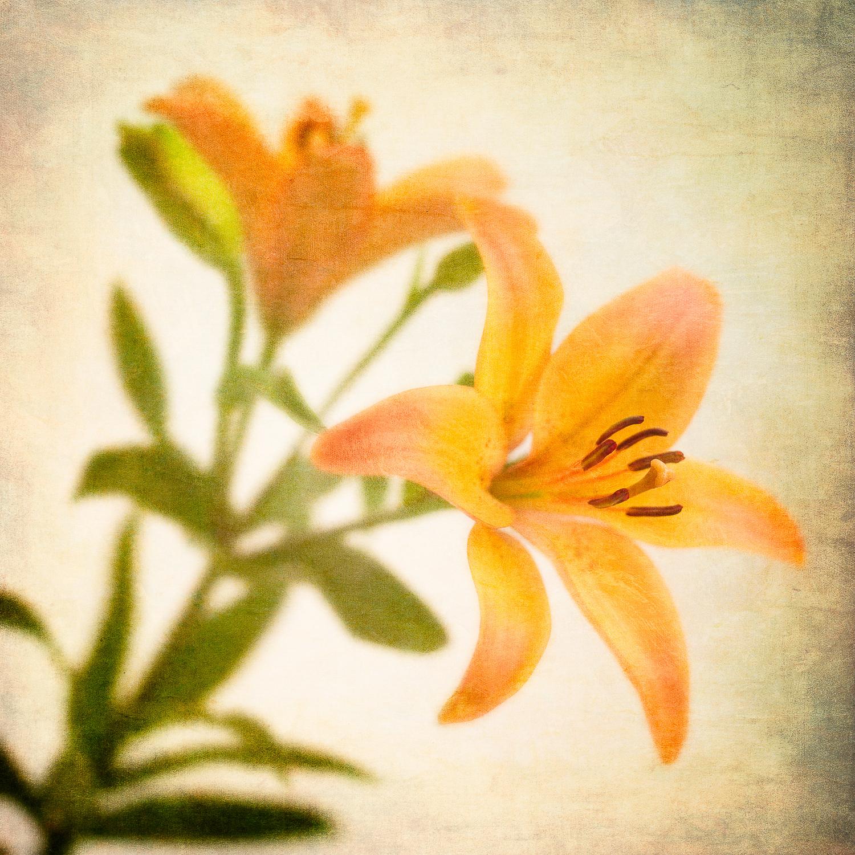 orange flowerV1L.jpg