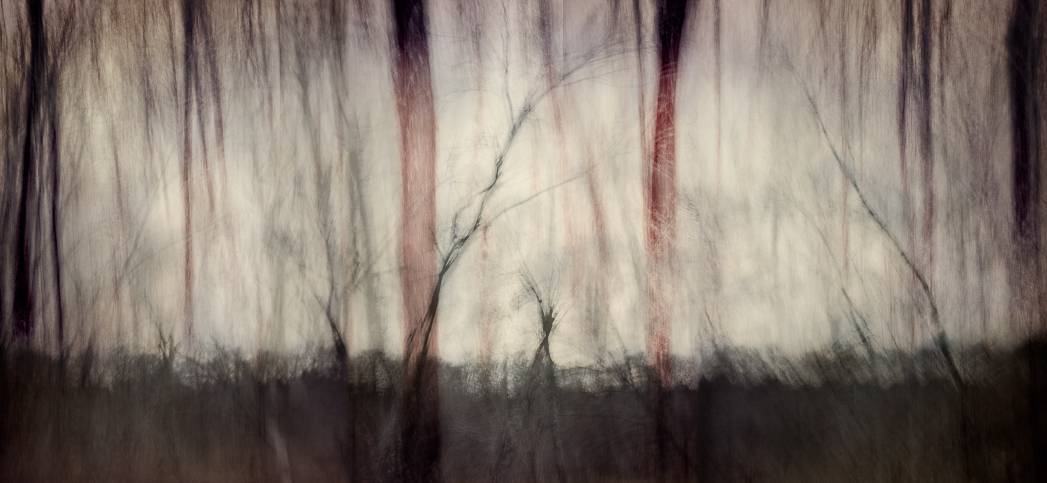 winter trees2-layered_warm.jpg