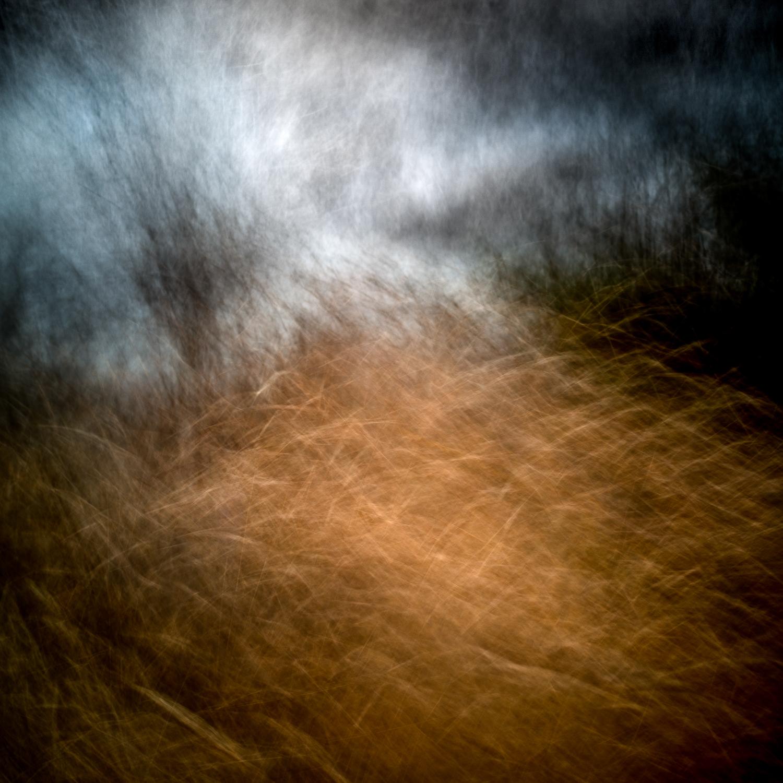 Grassy field#2square.jpg