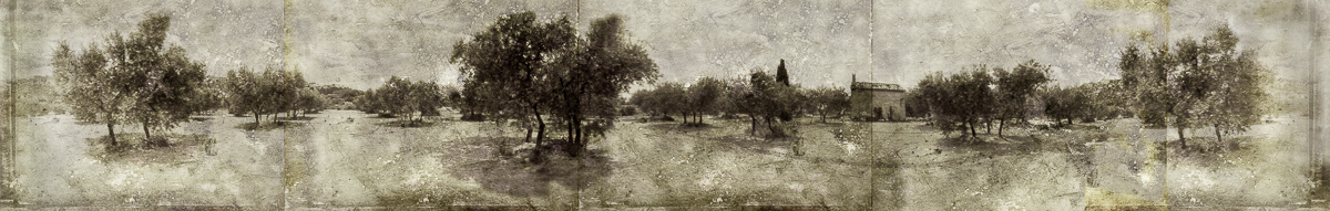 olive grove no border180dpicopy.jpg