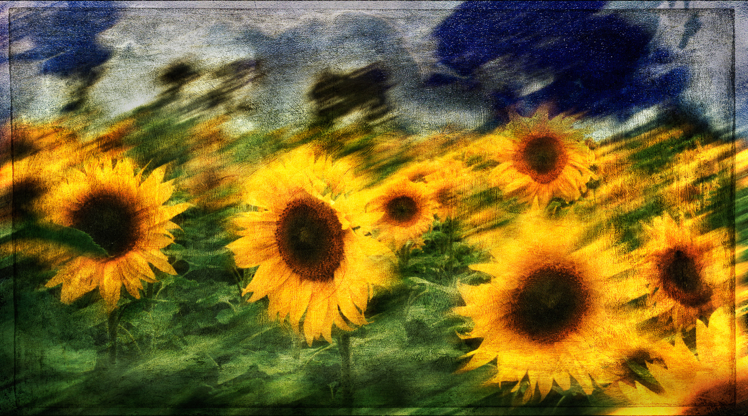 sunflowers-color-czechv3.jpg