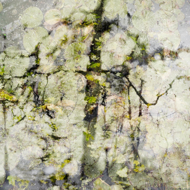 Altered Landscapes #19.jpg