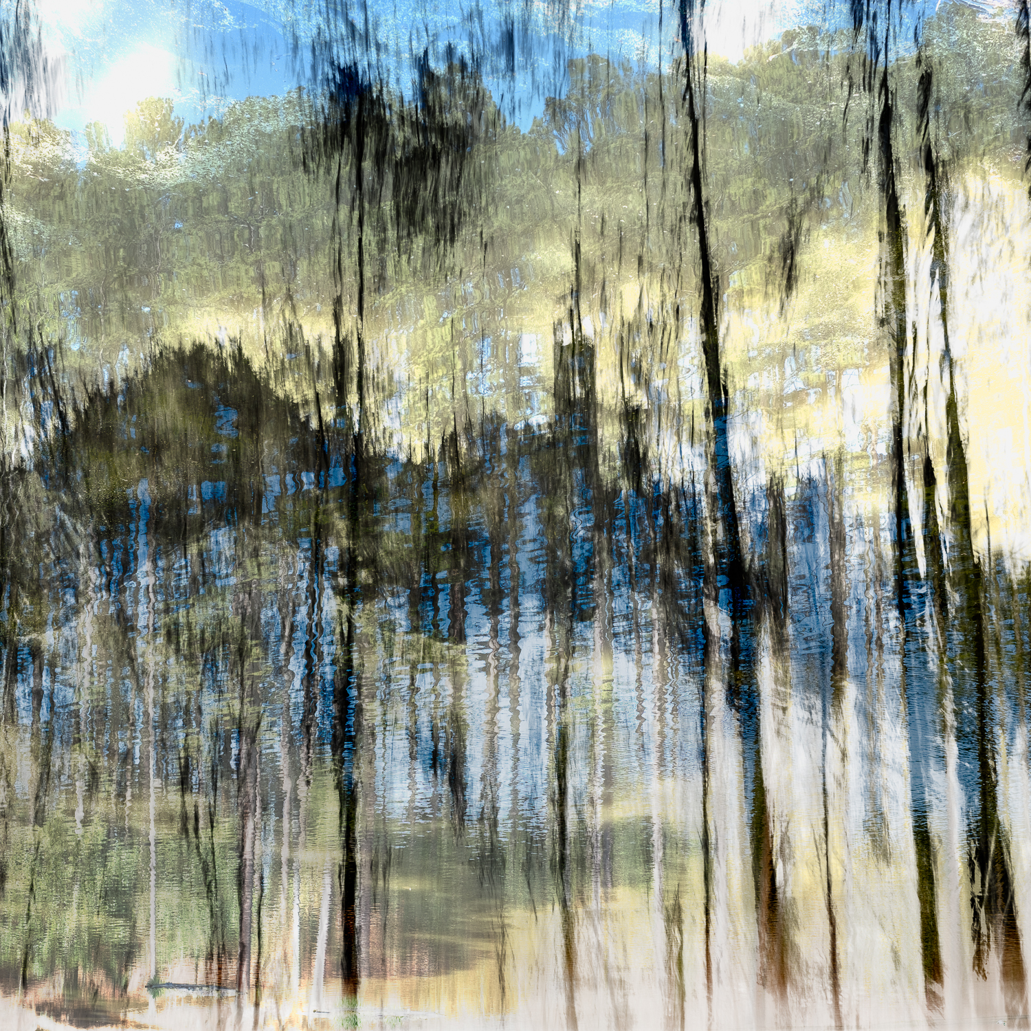 springtime in the forest_24x24_Print.jpg