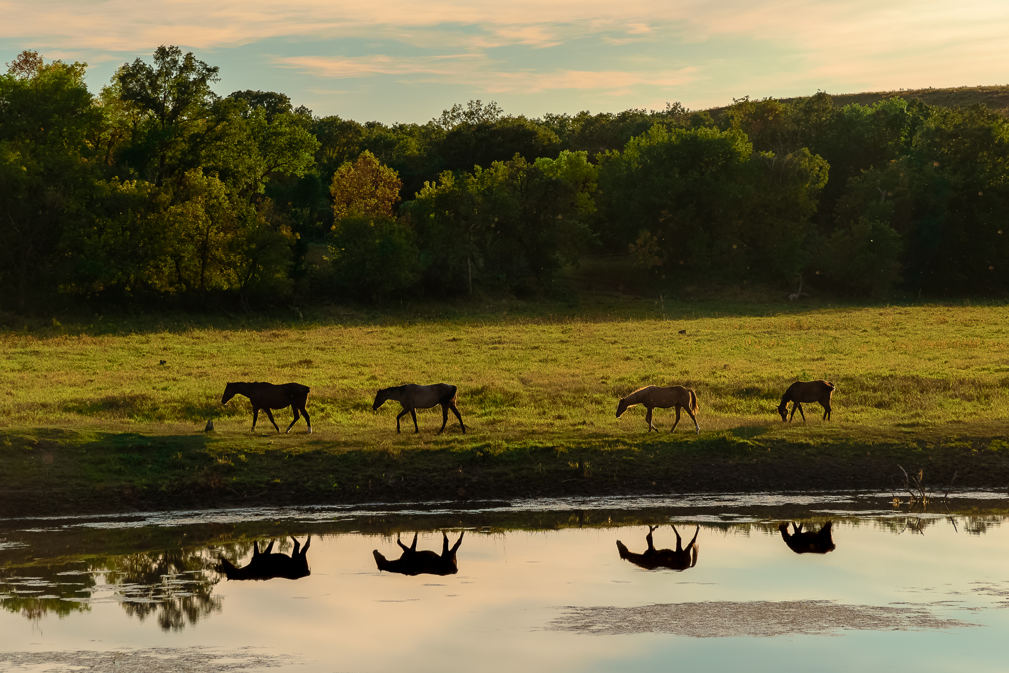 Four horses and no men. Standing Rock Reservation Area, ND.