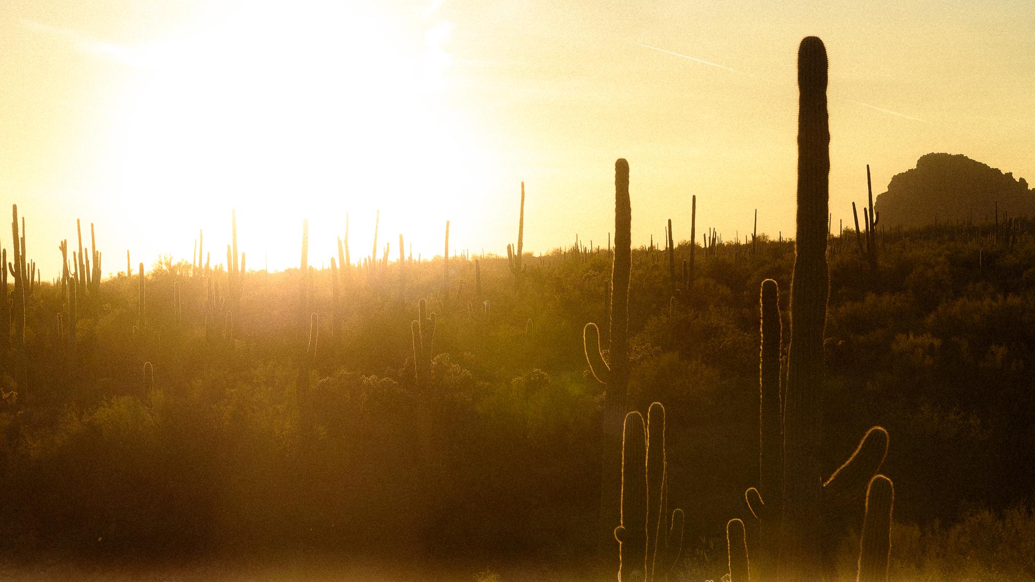 down_dusty_trails_superstition_mountains_golden_hour-2.jpg
