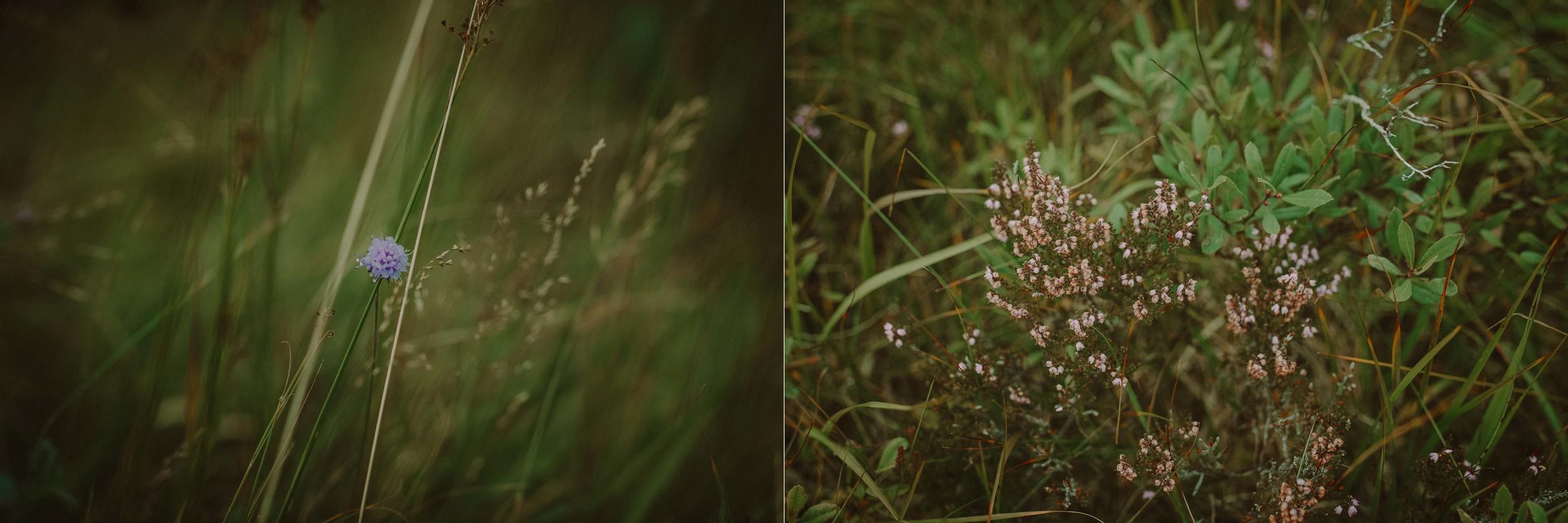 Glencoe Engagement Photography.jpg