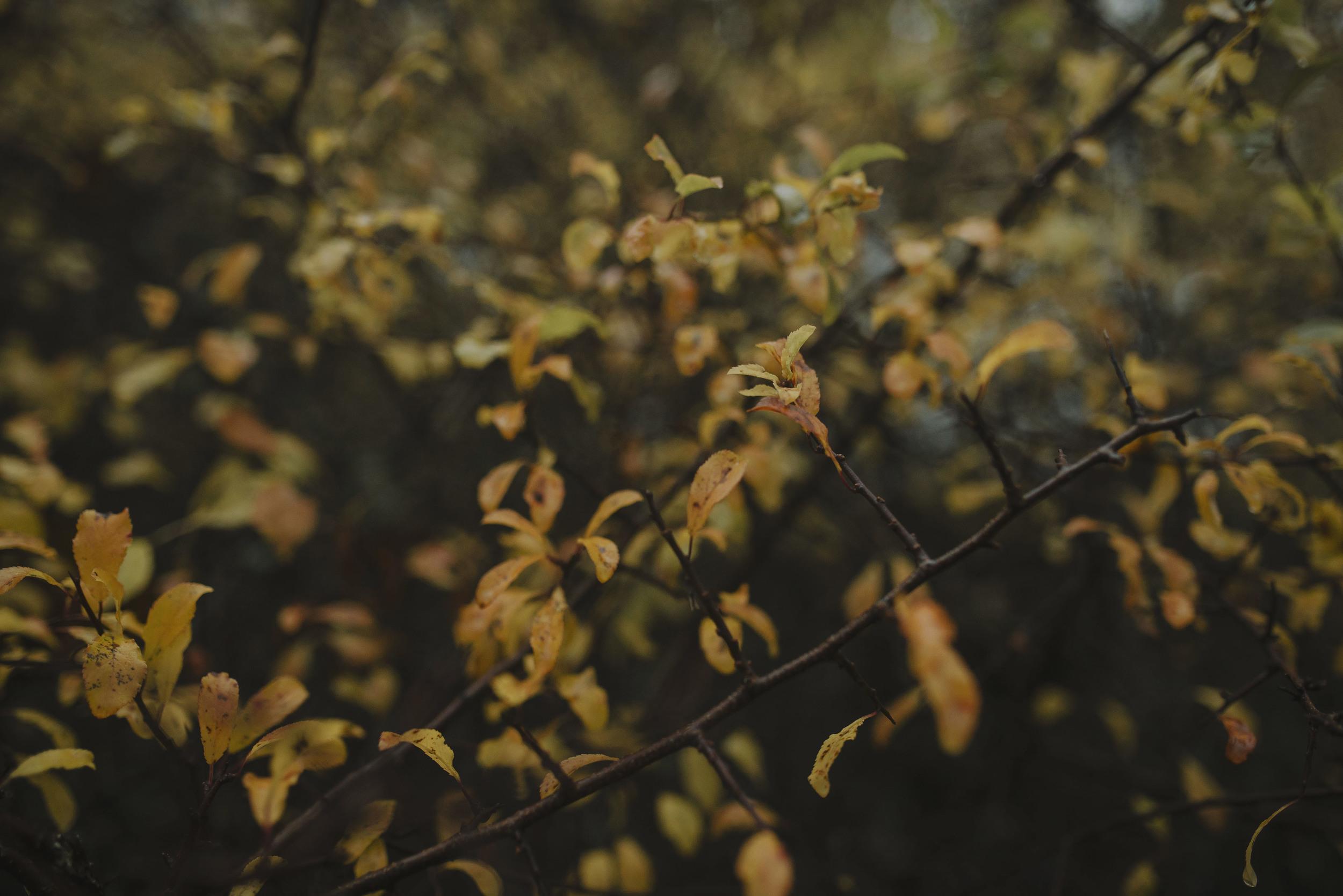 Scottish Highlands Engagement Photography 9.jpg