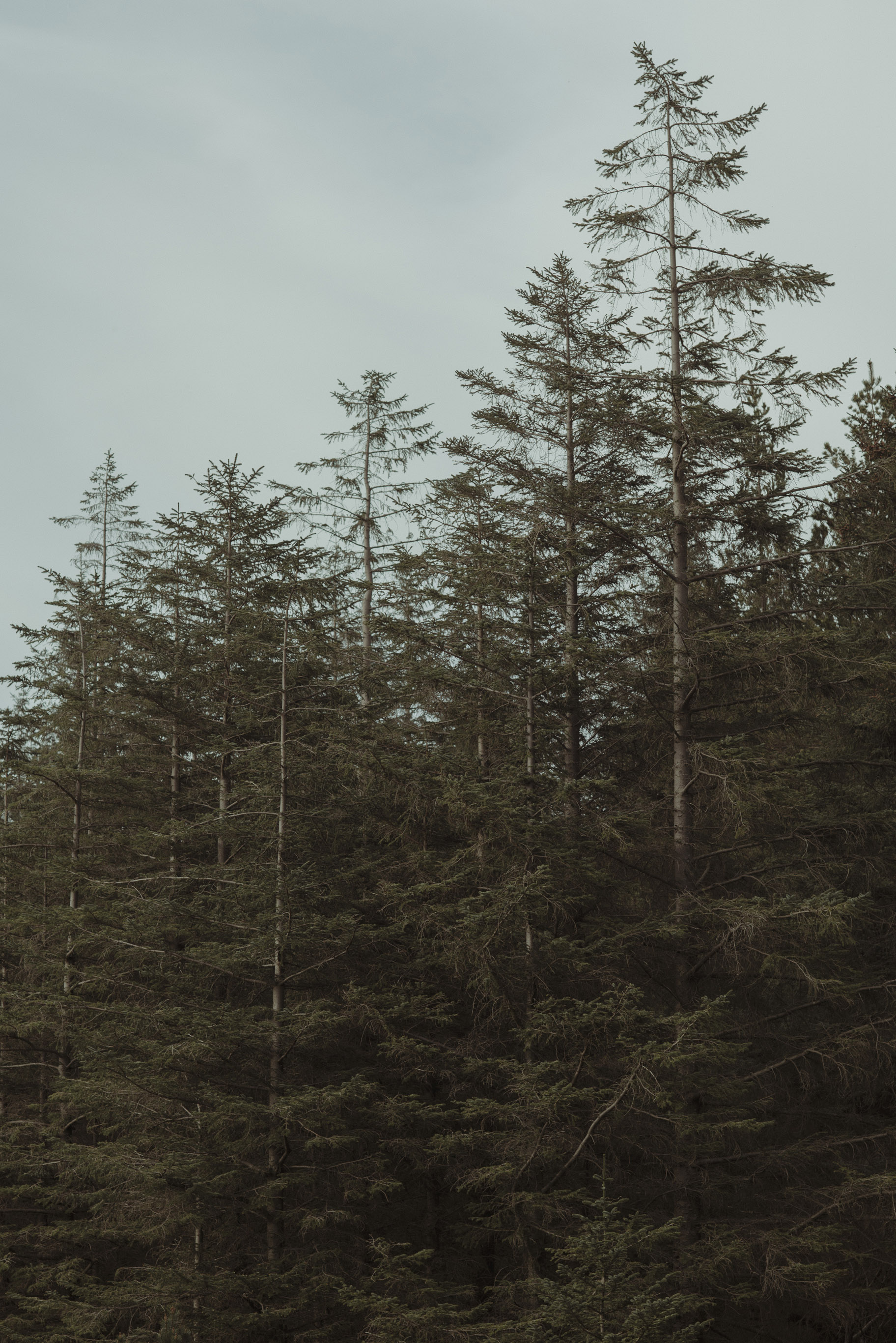 Isle of Skye Elopement67.jpg