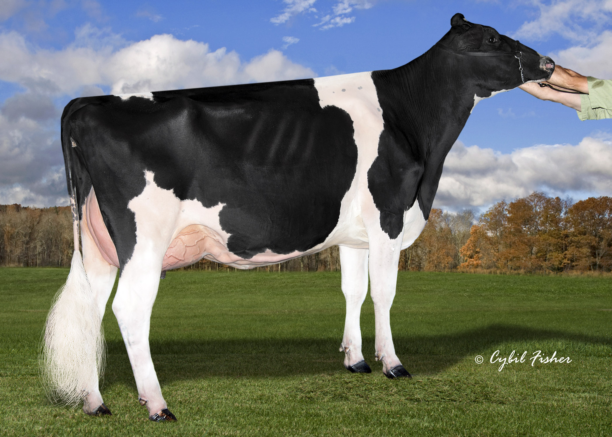 VT-Pond-View Atwood Lady (EX-93)