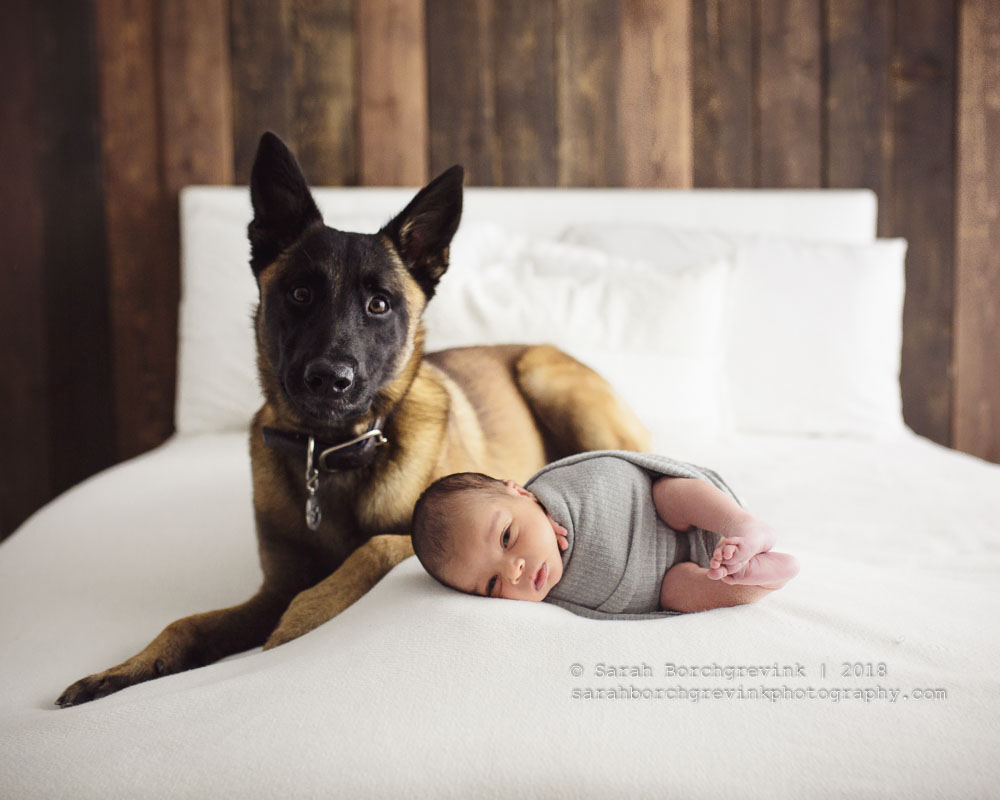 dog and newborn photography session
