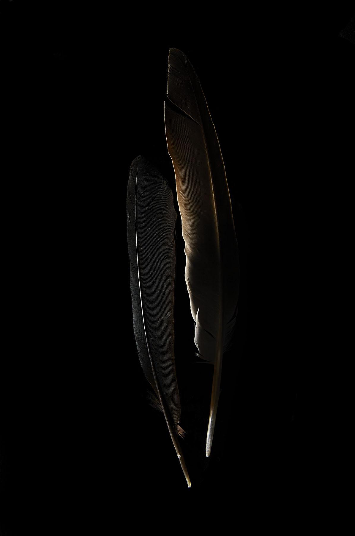 feather37543.jpg