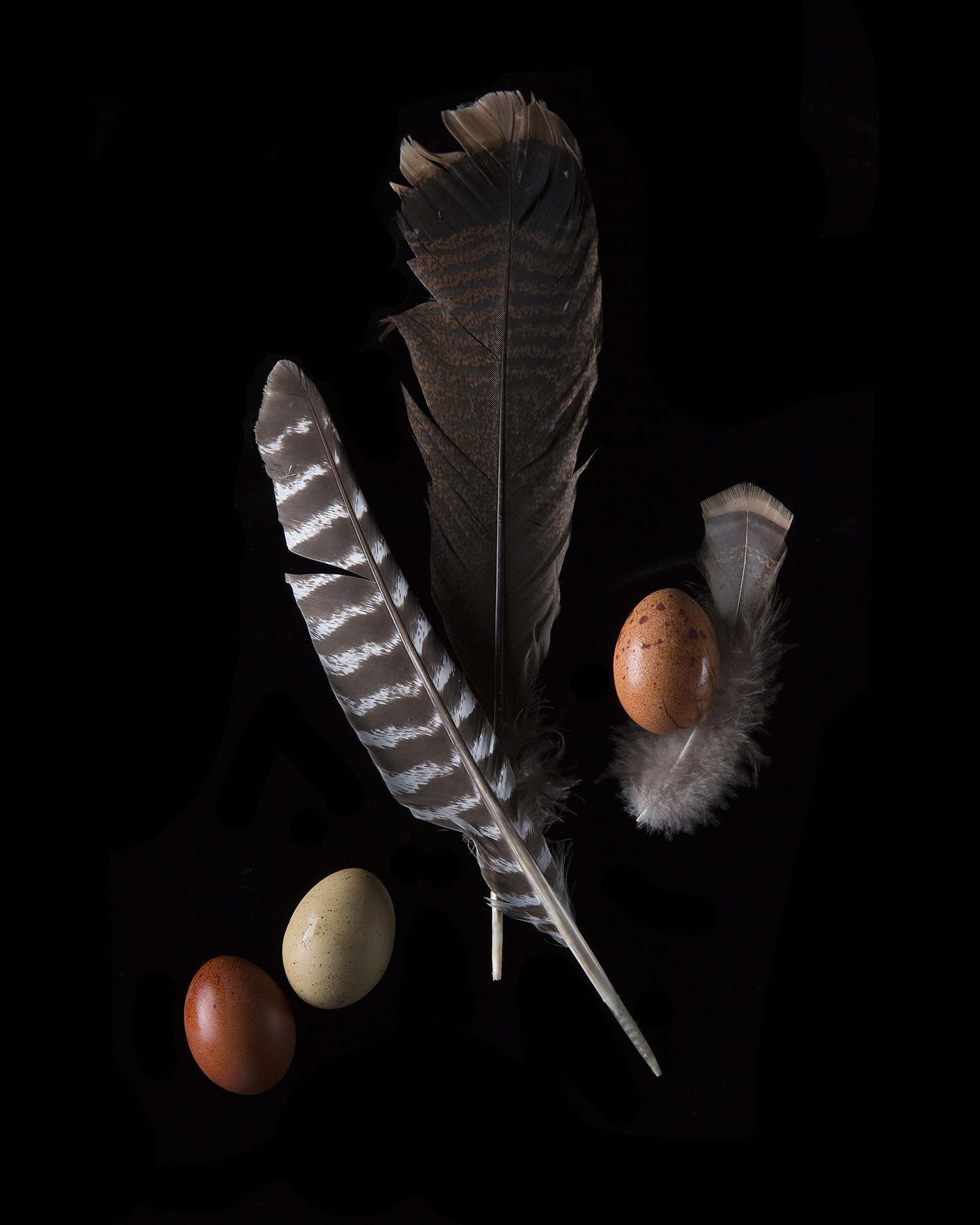 3egg w turkey feathers.jpg