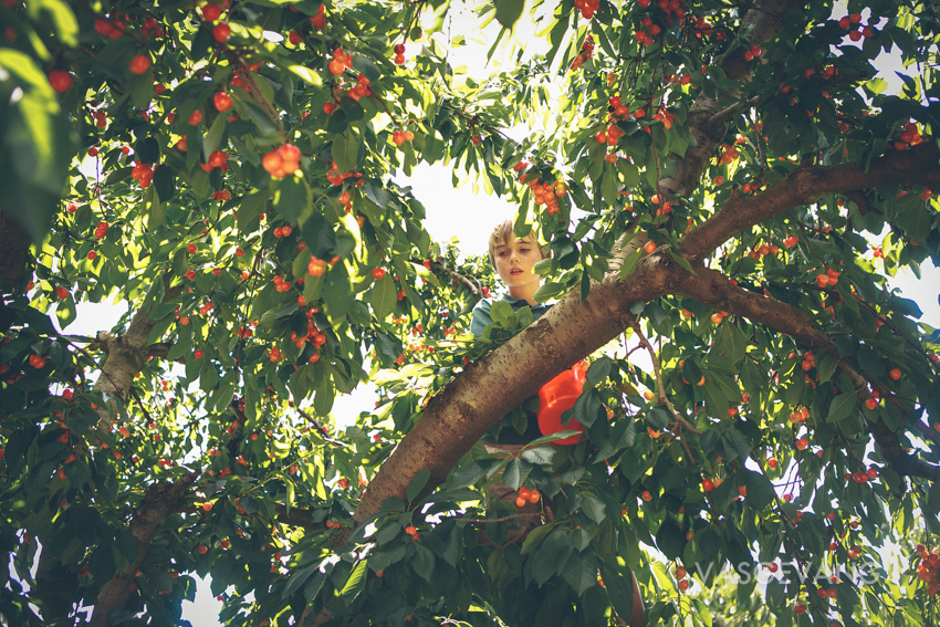 Cherry Picking in Ceres