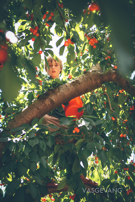 cerescherries-web-0931.jpg